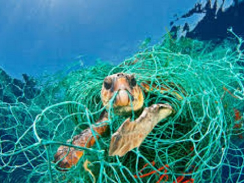 Hawksbill see turtle caught in net